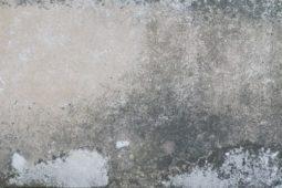 Feuchtigkeit, schimmel an Wände Mietminderung