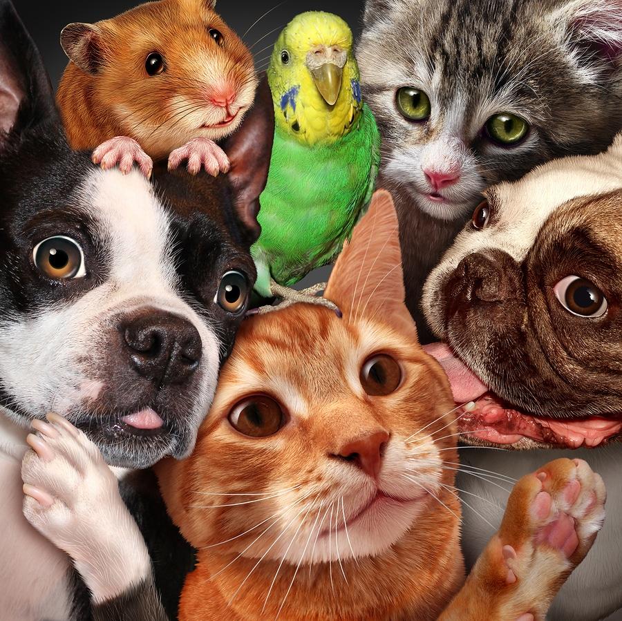 Haustierhaltung im Mietrecht