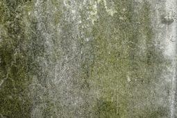 Schimmelpilz an Wand in Mietwohnung