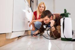 Mietminderungsanspruch wegen Ungezieferplage in der Wohnung