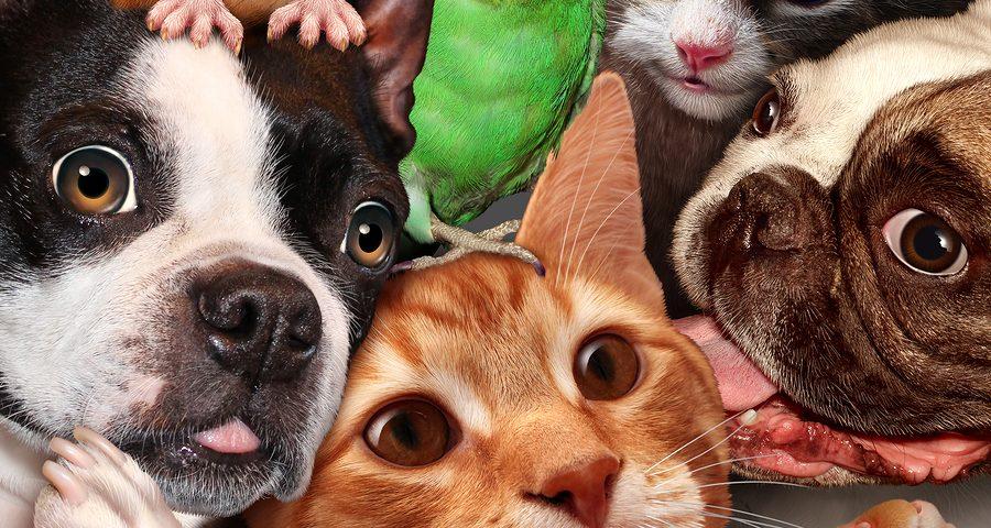 Wohnraummietvertrag: Wirksamkeit einer Begrenzung der Großtierhaltung