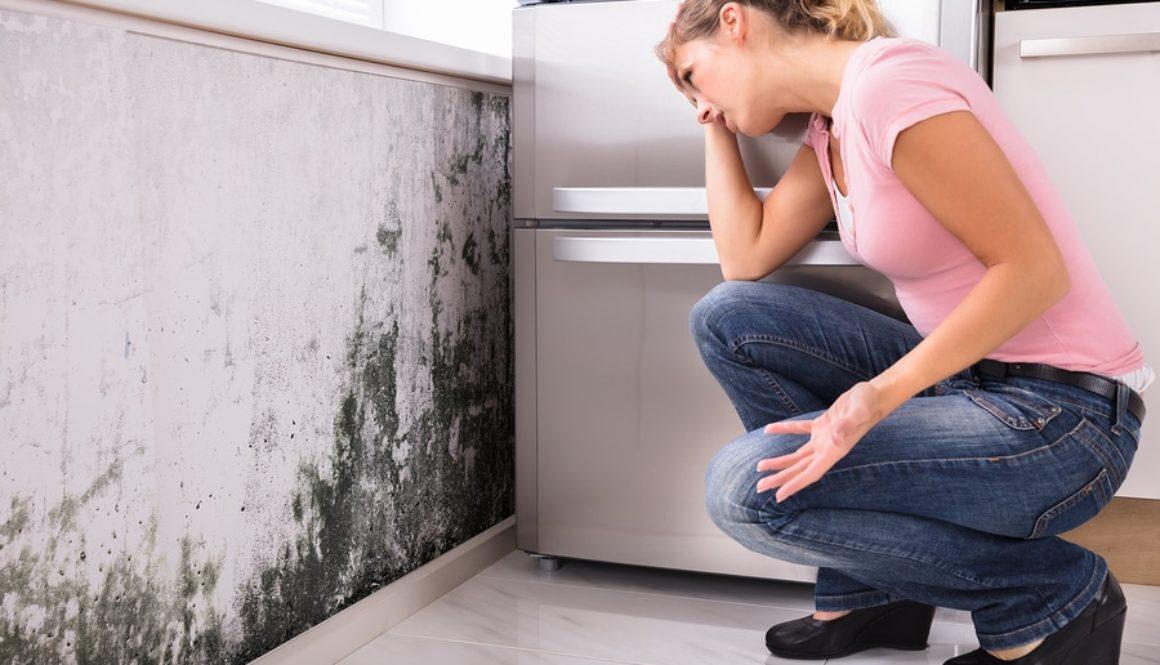 Mietminderung Schimmelneigung Einer Wohnung Als Wohnungsmangel