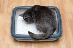 Mieterhaftung für die Beschädigung des Holzbodens durch Katzenurin