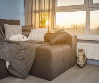 Mietvertrag - Wirksamkeit einer Tierhaltungsklausel
