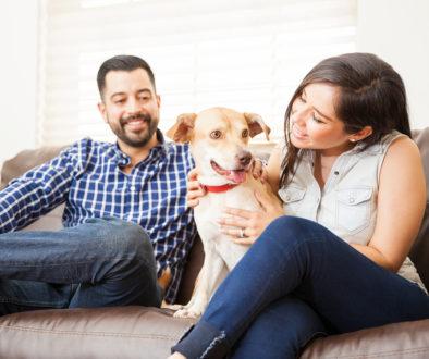 Haustierhaltung in Mietwohnungen