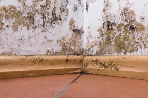 WEG - Einholung eines Sachverständigengutachtens zu Feuchtigkeitsschäden im Sondereigentum