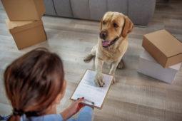 Fristlose Mietvertragskündigung bei fehlender Genehmigung der Hundehaltung