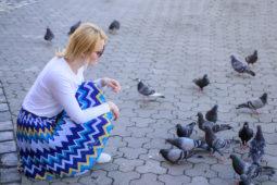 Taubenfütterung durch Mieter – fristlose Kündigung
