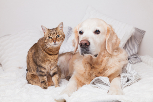 Generelles Hunde- und Katzenhaltungsverbot in einem Formularmietvertrag zulässig?