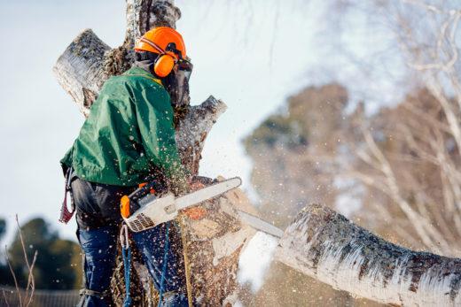 BetrKV - Umlagefähigkeit der Kosten für das Fällen kranker bzw. bruchgefährdeter Bäume