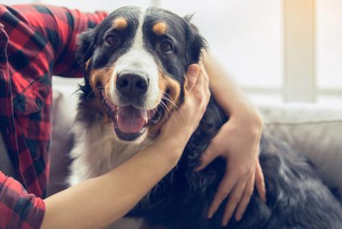 Wirksamkeit eines Hundehaltungsverbotes in Mietvertrag