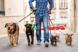 Wohnungseigentumsanlage - Leinenzwang für Hunde zulässig?