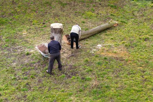 Baumfällkosten hat Mieter als Betriebskosten zu tragen - § 2 Nr. 10 BetrKVO