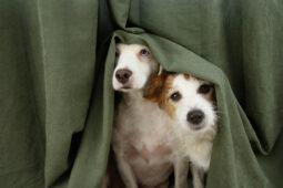 Genehmigung der Haltung eines zweiten Hundes in einer Mietwohnung