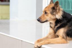 Mietvertragsklausel über Tierhaltungsverbot mit Entziehungsmöglichkeit für Hundehaltungserlaubnis