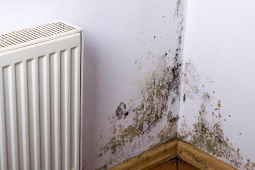 Beweislast für die Ursache von Feuchtigkeitsschäden in einer Mietwohnung