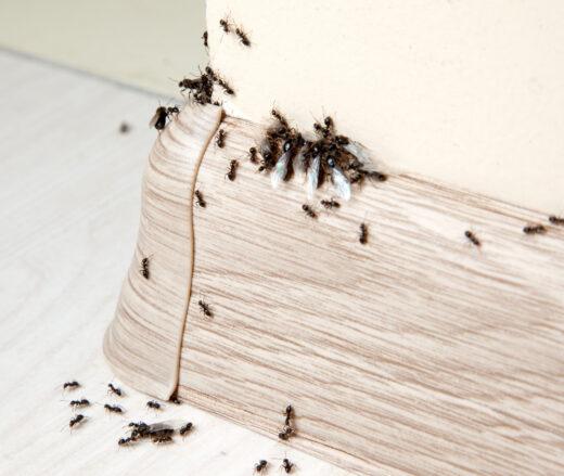 Insektenbefall wohnung
